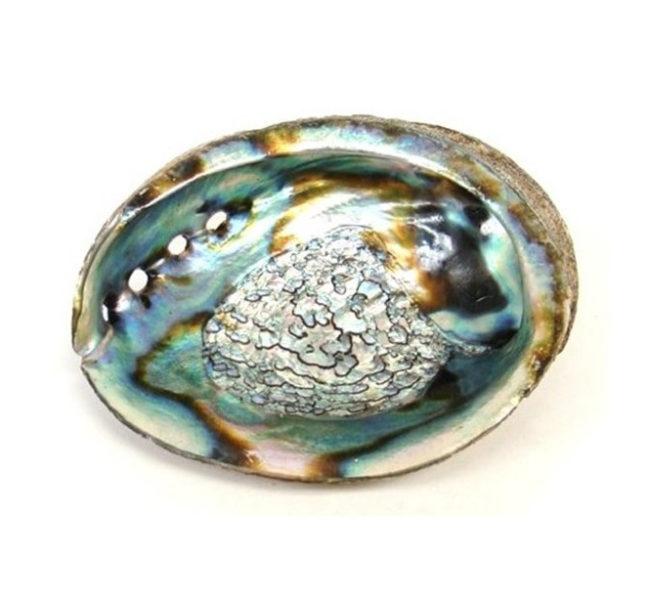 Coquillage Abalone Shop Spirituel